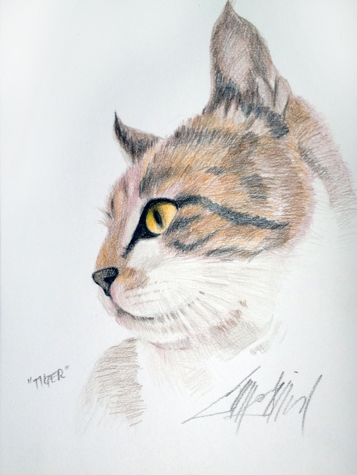 Tiger - Colored Pencil
