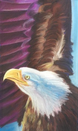 "Eagle - Pastel on Paper 14"" x 25"""
