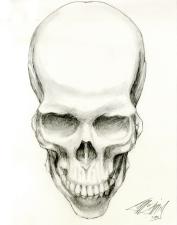 Skull Study One
