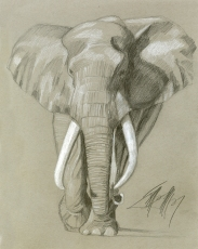African Elephant - Collection of Seth Levy | Dallas, Texas